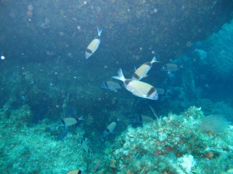 Aiuti alle imprese che hanno osservato l'arresto facoltativo della pesca, domanda entro il 15 ottobre 2013, Sardegna.