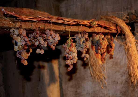 Primavera nel Marghine Ogliastra e Baronia - Ilbono 2014 uva rossa