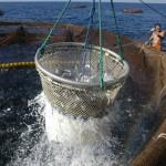 Programmare il futuro dell'acquacoltura in Sardegna. E' l'obiettivo dell'incontro promosso dalla Coldiretti impresa pesca in programma mercoledì 26 novembre 2014 a Cagliari.