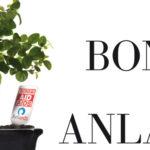 Un bonsai per l'ANLAIDS – Sabato 4 Aprile 2015 la Consulta giovani del Comune di Oristano in piazza Eleonora per raccogliere fondi contro l'HIV.