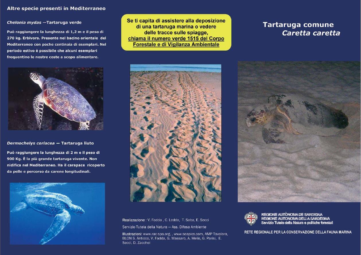Nidificazioni di Tartaruga comune Caretta caretta sulle spiagge della Sardegna