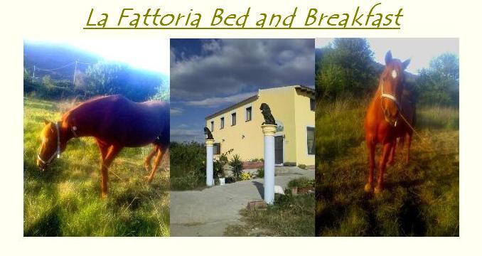 La Fattoria Bed and Breakfast Offerte Primavera Estate Pasqua e Pasquetta 2014 Località Cuccu-Ezzu Torpè (NU).