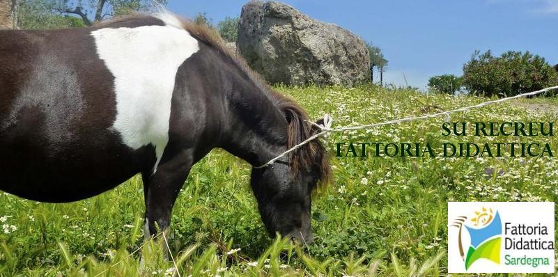 """Azienda Agricola Agrituristica e Fattoria Didattica accreditata dalla Regione Sardegna """"Su Recreu"""" Str. Prov. 28 Ittiri-Romana - Reg. Camedda 07044 Ittiri (SS)."""