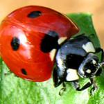 Notizie Sardegna: Realizzazione di Orti scolastici biologici, bando 2013.