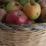Notizie Sardegna: Le domande per l'iscrizione all'elenco regionale dei fornitori delle aziende agrituristiche scadono il 22 febbraio 2013.