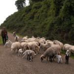 Notizie Sardegna: Lingua blu – Falchi, chiederò alla Giunta di costituirci parte civile