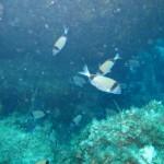 Aiuti alle imprese che hanno osservato l'arresto facoltativo della pesca.