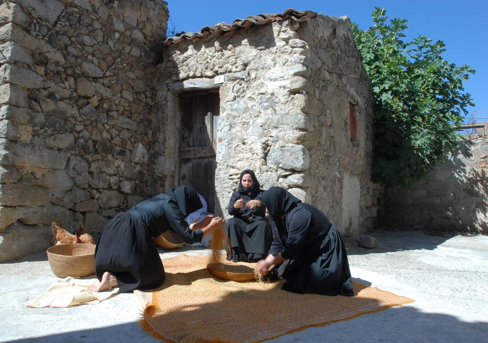 Fase di asciugatura del grano tradizione Sardegna