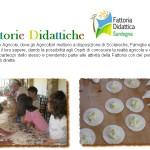 Fattorie Didattiche in Sardegna: percorsi didattici in fattoria per l'educazione alimentare dei bambini.