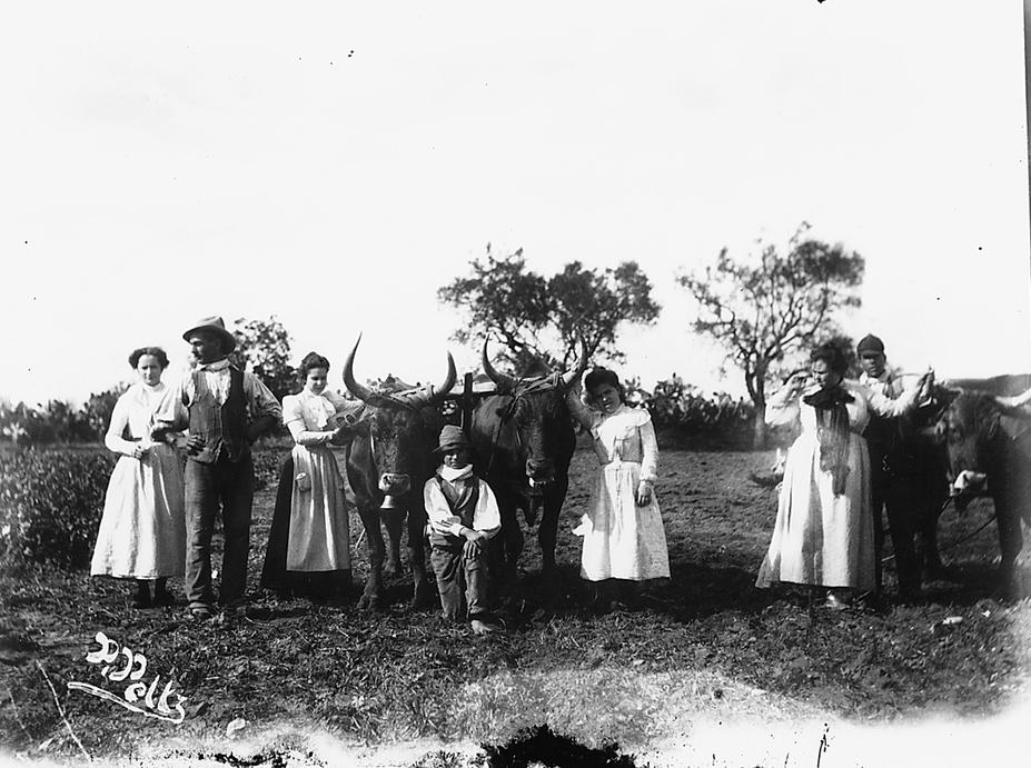 Gruppo in posa con buoi dalle lunghe corna in occasione della vendemmia