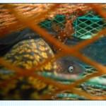 Sardegna Pesca 2014: Adesioni ad attività sperimentali relative alla pesca.
