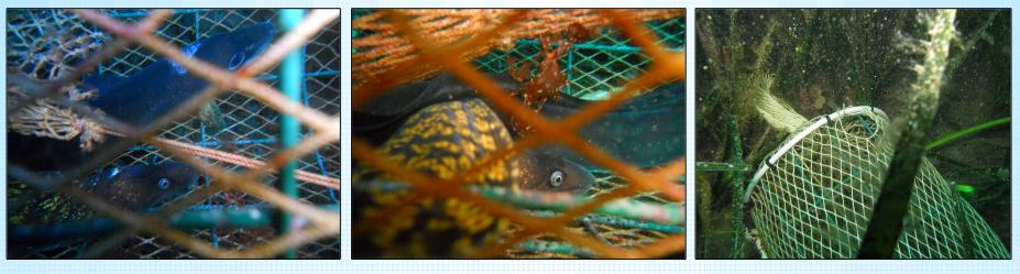 Sardegna Pesca 2014: Adesioni ad attività sperimentali relative alla pesca
