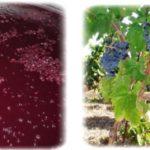 I vini sardi al Vinitaly dal 6 al 9 aprile 2014