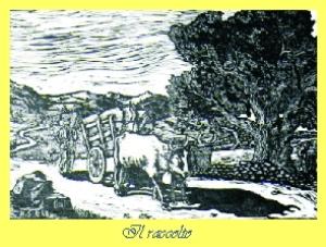 Il Raccolto Nicolino Sirigu