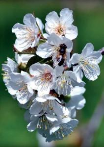 Primavera a Lanusei 2014 - Pianta fiori
