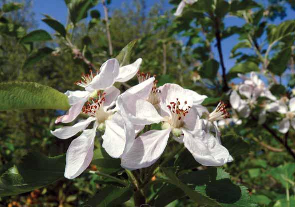 Primavera nel Marghine Ogliastra e Baronia - Ilbono 2014 i fiori