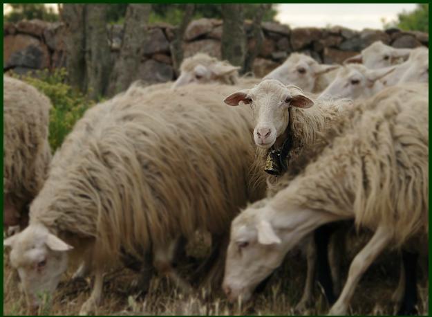 agriturismo conca e janas le pecore