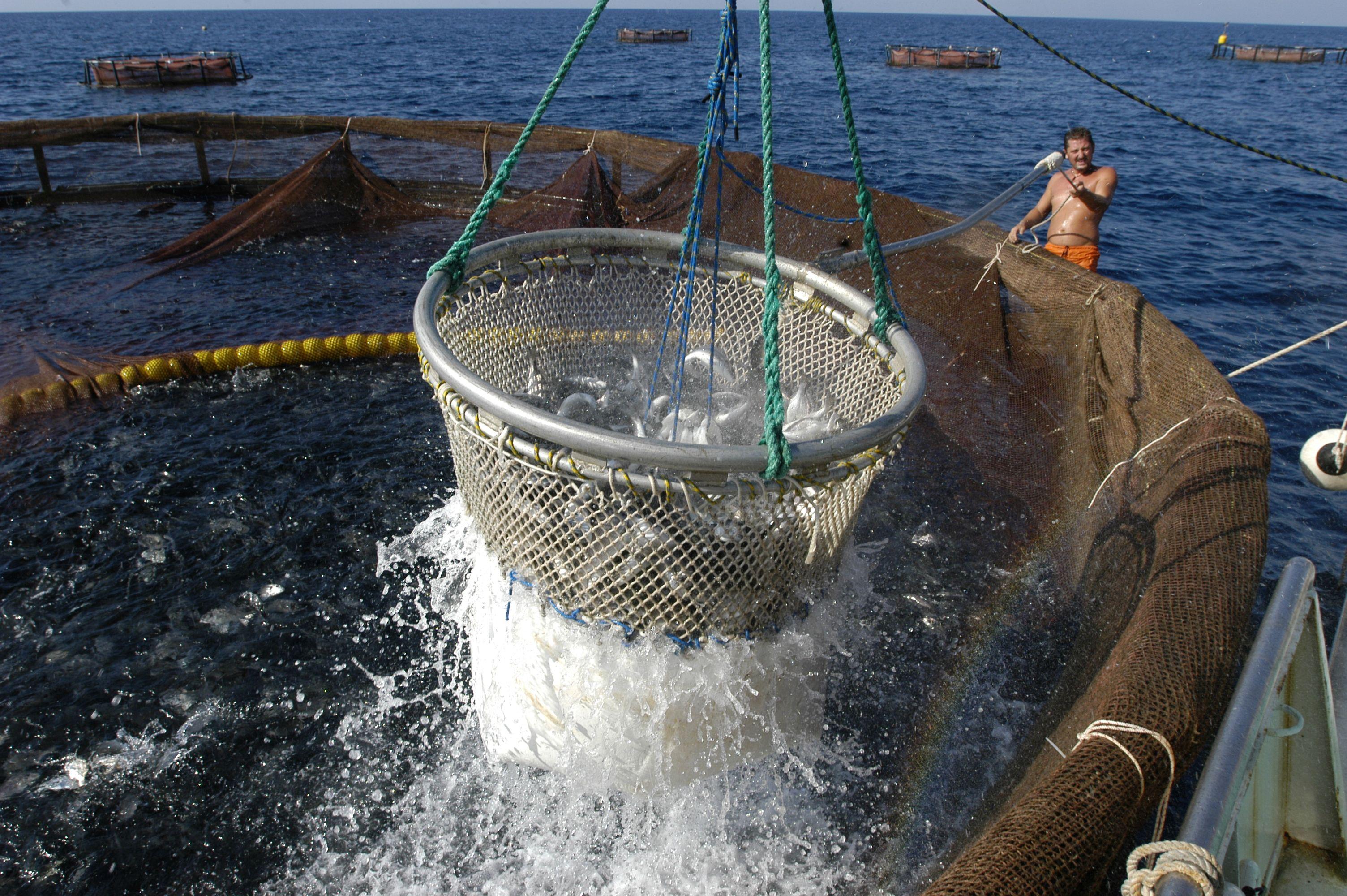 Sardegna acquacoltura le idee di Coldiretti