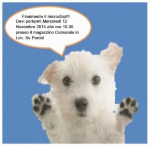 San Vero Milis servizio di microchippatura gratuita dei cani nella giornata di mercoledì 12 novembre 2014