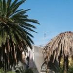 Punteruolo rosso: una pandemia di immani dimensioni per il patrimonio di palme della Sardegna.