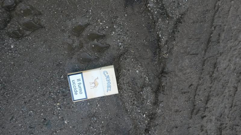 IZS Orma. Intervento dell'Izs Sardegna in relazione alle segnalazioni di aggressioni a ovini nei territori di Bultei e Nughedu San Nicolò. Le segnalazioni parlano di avvistamenti di un felino di grossa taglia. E' una pantera?