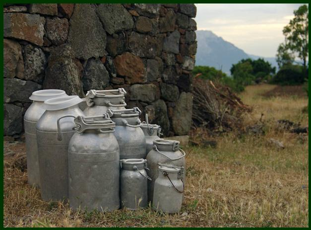 Le spettacolari immagini dell'articolo sono dei Prodotti Tipici dell'Azienda Agricola Agrituristica Conca Conca'e Janas.