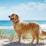 """Confermata a Sorso per la stagione estiva 2015 la """"Bau Beach"""" la spiaggia accessibile ai cani in prossimità della discesa n° 4."""