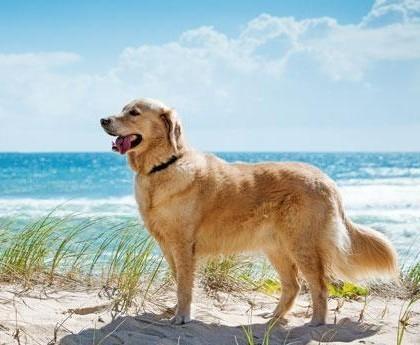 """Istituita a Sorso, anche per la stagione estiva 2015, la """"Bau Beach"""": la spiaggia accessibile ai cani, in prossimità della discesa n° 4."""