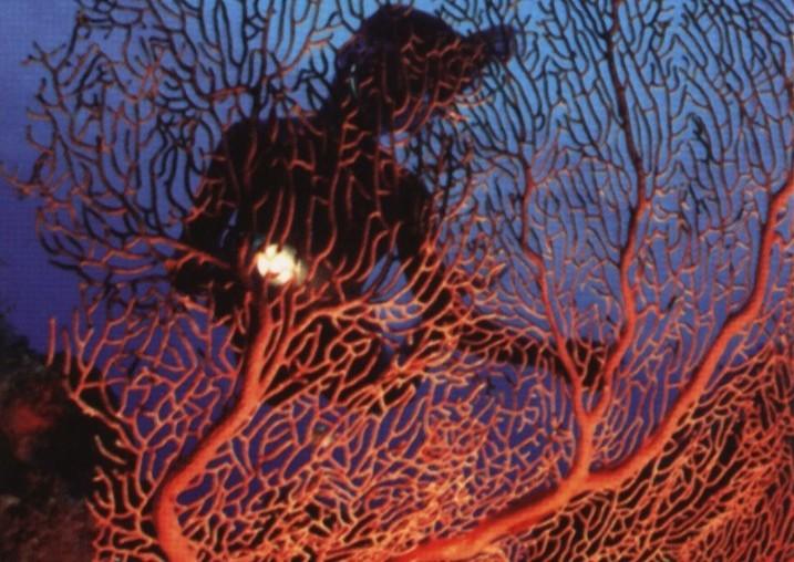 Corallo Rosso in pericolo. La Riviera del Corallo si difende dalle imitazioni, subito una campagna di informazione e un marchio di qualità.