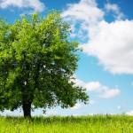La giornata dell'albero, 87 alberi per i nuovi nati del 2014