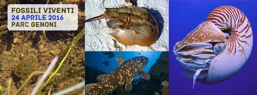 Alla scoperta dei Fossili viventi Parc e Museo del Cavallino della Giara 24 Aprile 2016.