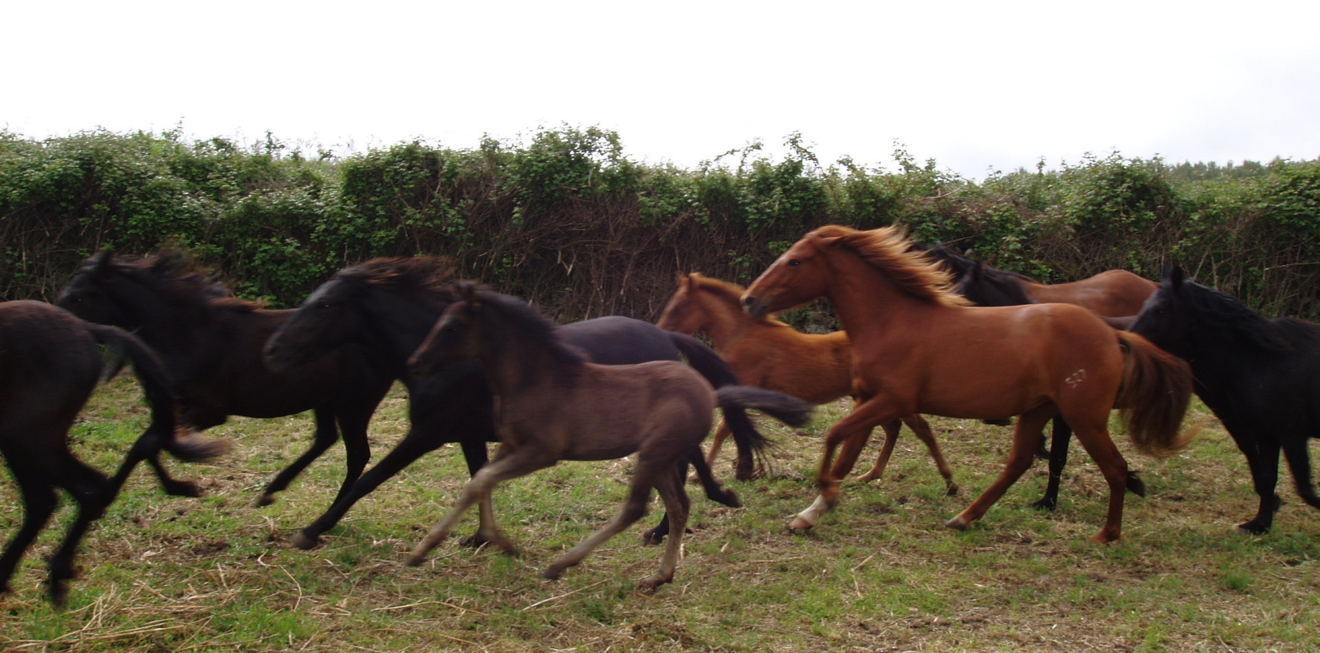 Foresta Funtanamela cavalli al pascolo