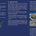 Nidificazioni di Tartaruga comune Caretta caretta sulle spiagge della Sardegna.
