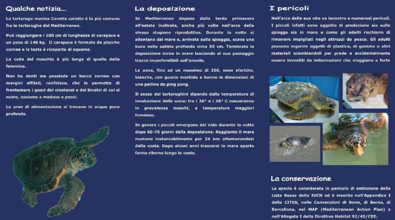 Informazioni sulle Nidificazioni di Tartaruga comune Caretta caretta sulle spiagge della Sardegna