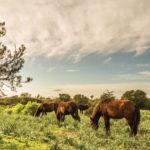 Mostra Fotografica La Grande Giara – Vita sull'Altopiano di Alessio Orrù dal 5 agosto al 2 ottobre 2016 presso il Museo del Cavallino della Giara a Genoni.
