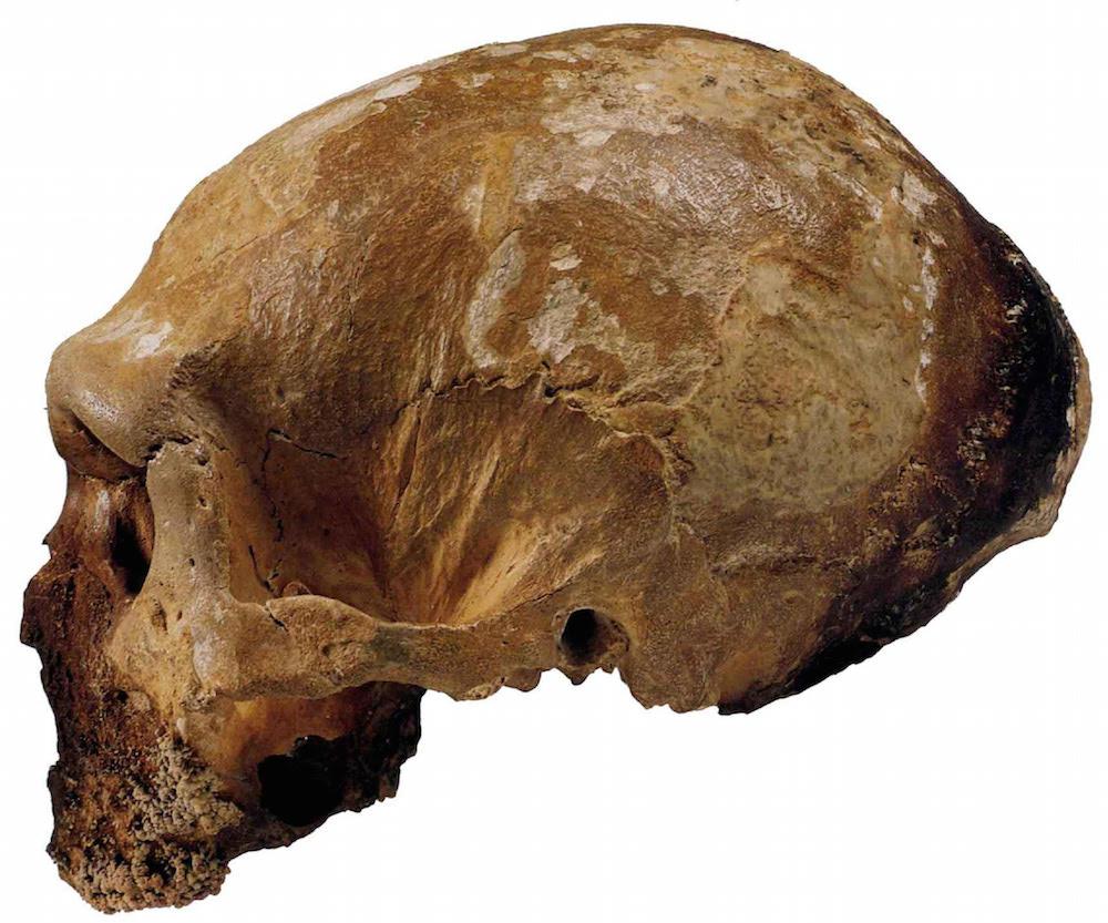 I cugini antenati: Neanderthal e noi  Al Museo della Tonnara venerdì 25 agosto 2017 una conferenza antropologica