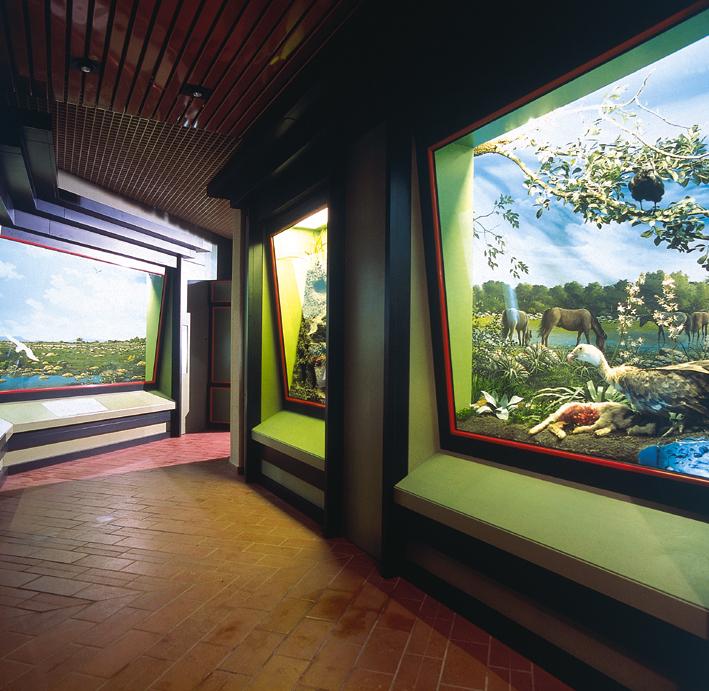"""Museo Naturalistico del Territorio """"Giovanni Pusceddu"""""""