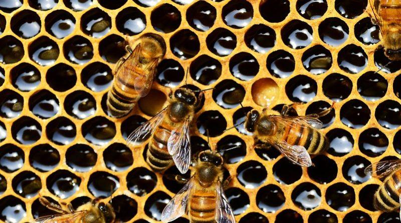 Coldiretti Nuoro Ogliastra. Caldo e siccità hanno dimezzato le api