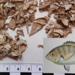 """Stintino 4 ottobre 2017 Museo della Tonnara convegno internazionale """"Fish and fishing community""""."""