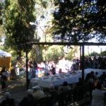 Torna a Casa Serena la Festa dell'uva